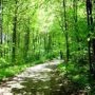 """""""La industria forestal sólo provoca pobreza y peor vida en Chile"""""""