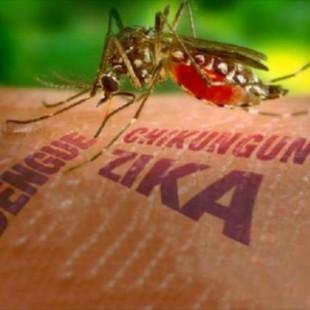 ¿Qué hay detrás de la epidemia del Zika?