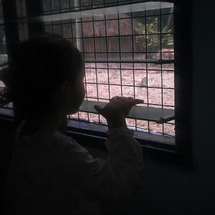 Argentina: Niñas en la hoguera
