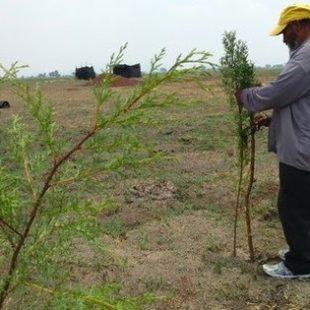 Árboles en lugar de carretera: campesinos de Atenco y Tocuila –