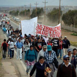 Jornaleros de San Quintín promueven boicot a Driscoll's en rechazo a renegociación del TLC