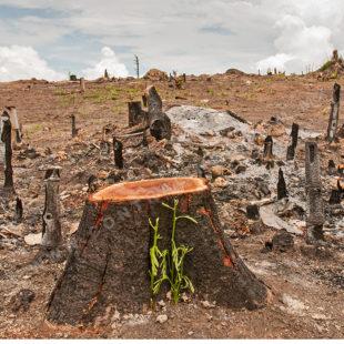 """En pleno calentamiento global, México es """"líder mundial"""" en deforestación"""